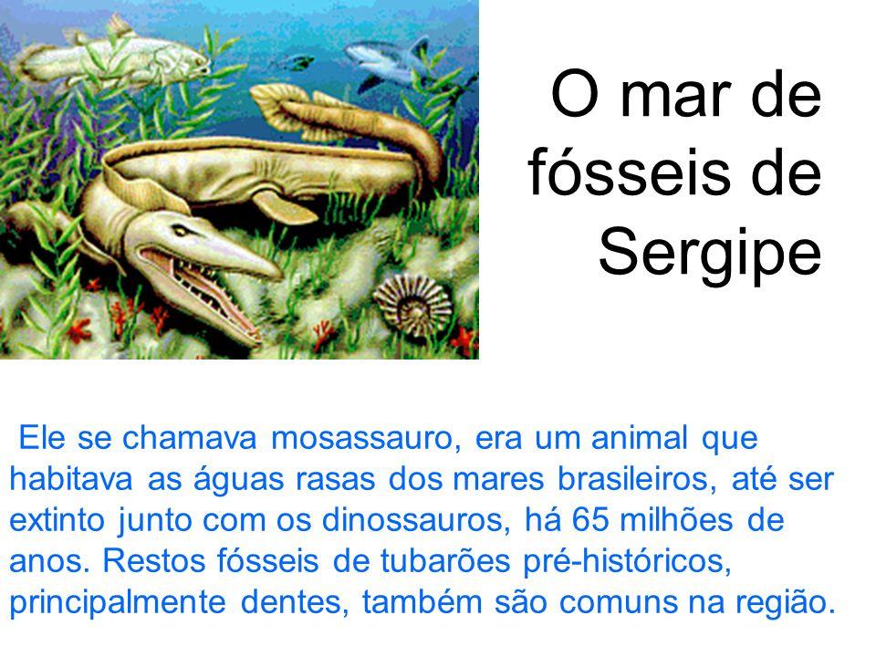 Ele se chamava mosassauro, era um animal que habitava as águas rasas dos mares brasileiros, até ser extinto junto com os dinossauros, há 65 milhões de