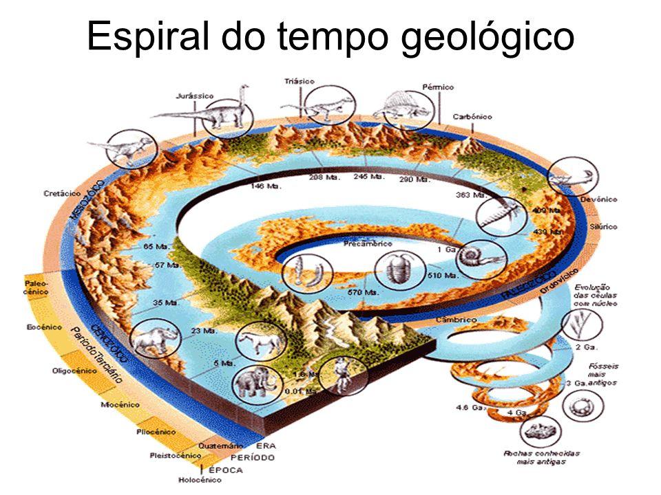 Classificação dos fósseis Fósseis são restos de animais e plantas que se conservaram acidentalmente por milhares de anos.