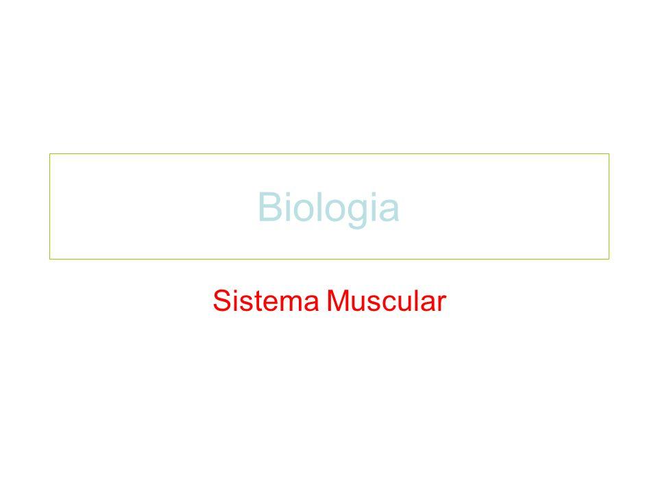 Biologia Sistema Muscular