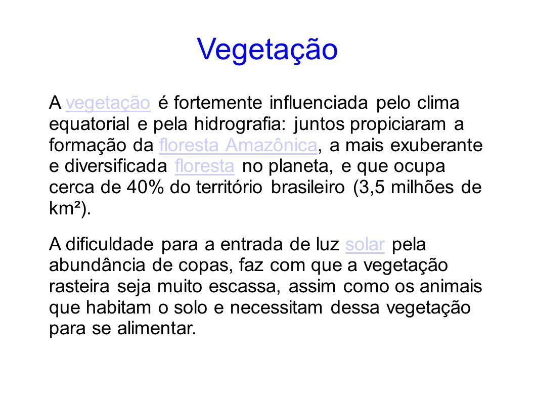 Vegetação A vegetação é fortemente influenciada pelo clima equatorial e pela hidrografia: juntos propiciaram a formação da floresta Amazônica, a mais