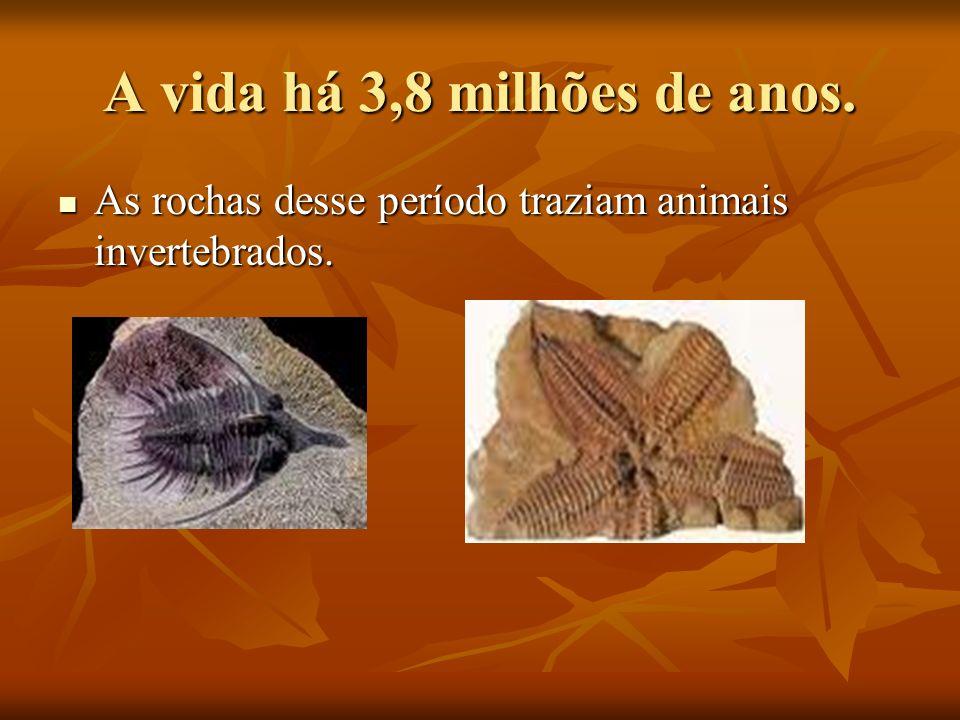 A vida há 3,8 milhões de anos. As rochas desse período traziam animais invertebrados. As rochas desse período traziam animais invertebrados.