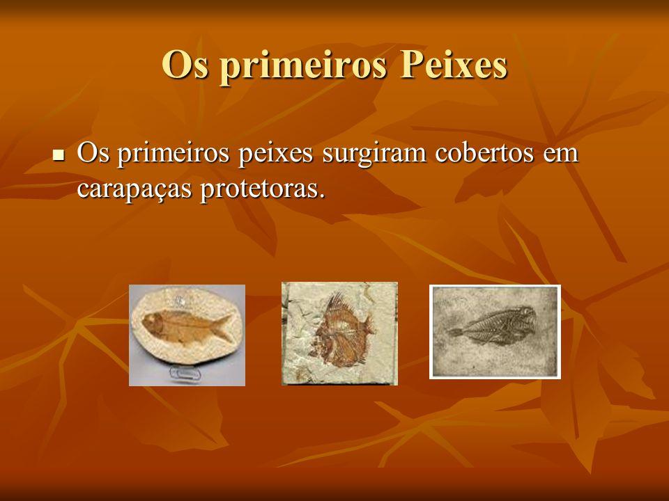 Os primeiros Peixes Os primeiros peixes surgiram cobertos em carapaças protetoras. Os primeiros peixes surgiram cobertos em carapaças protetoras.