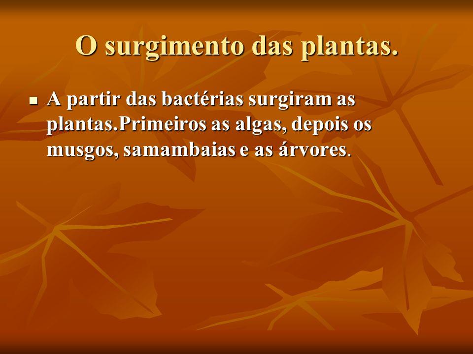O surgimento das plantas. A partir das bactérias surgiram as plantas.Primeiros as algas, depois os musgos, samambaias e as árvores. A partir das bacté