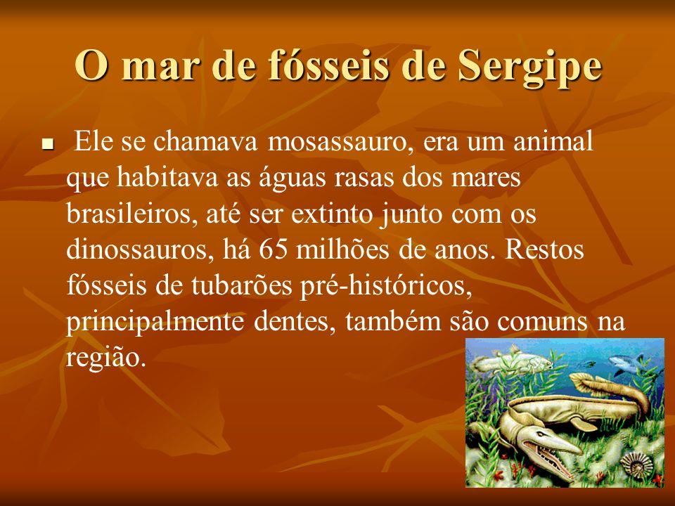 O mar de fósseis de Sergipe Ele se chamava mosassauro, era um animal que habitava as águas rasas dos mares brasileiros, até ser extinto junto com os d