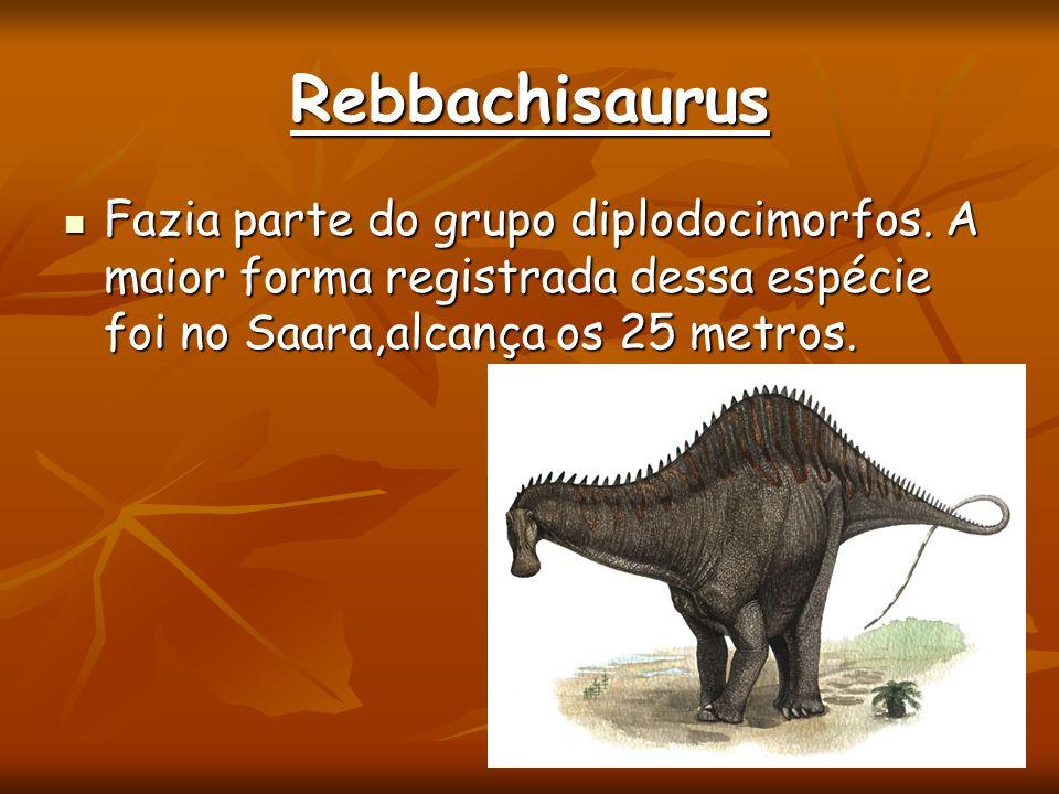 Rebbachisaurus Fazia parte do grupo diplodocimorfos. A maior forma registrada dessa espécie foi no Saara,alcança os 25 metros. Fazia parte do grupo di