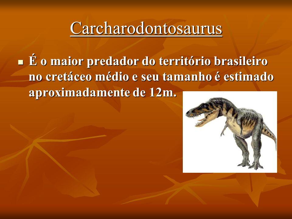 Carcharodontosaurus É o maior predador do território brasileiro no cretáceo médio e seu tamanho é estimado aproximadamente de 12m. É o maior predador