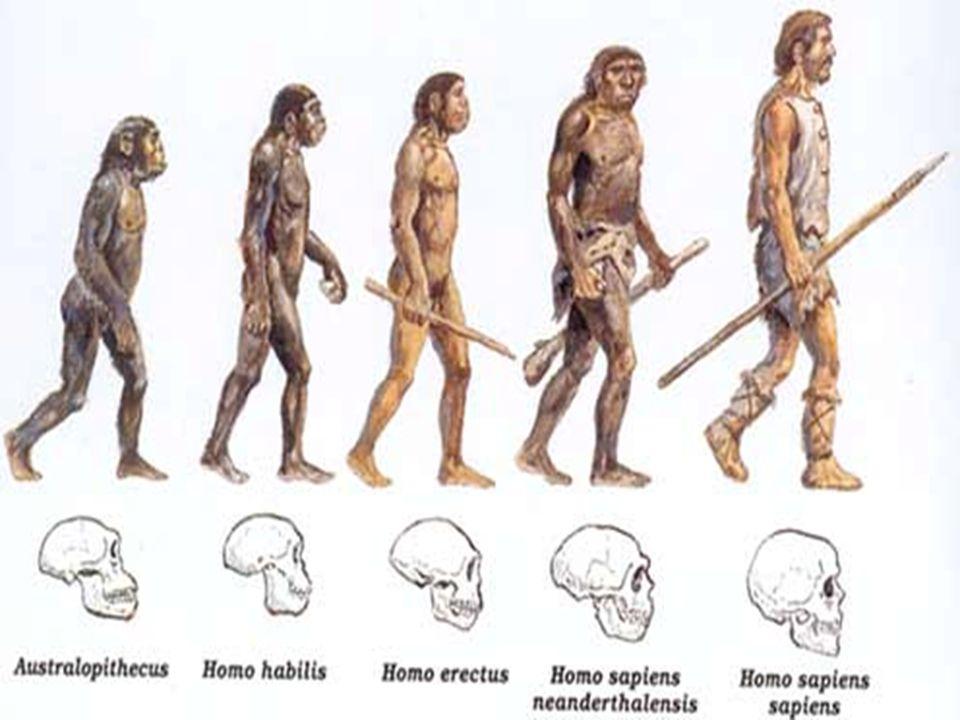 EVOLUÇÃO HUMANA A evolução humana, ou antropogênese, é a origem e a evolução do Homo sapiens como espécie distinta de outros hominídeos, dos grandes macacos e mamíferos placentários.