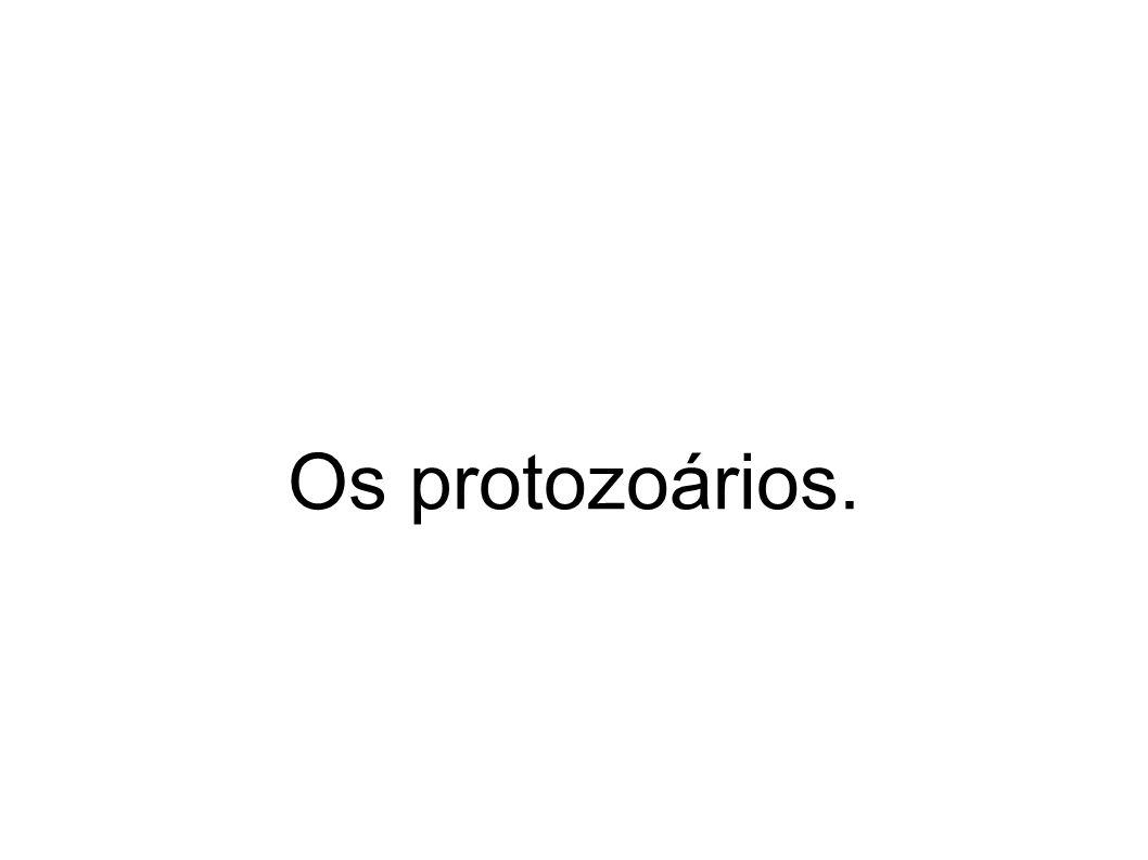 Os protozoários.