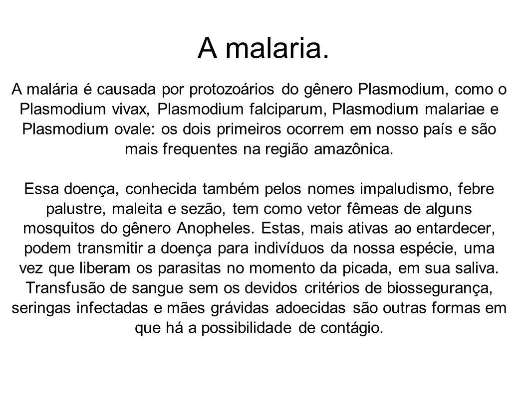 A malaria. A malária é causada por protozoários do gênero Plasmodium, como o Plasmodium vivax, Plasmodium falciparum, Plasmodium malariae e Plasmodium
