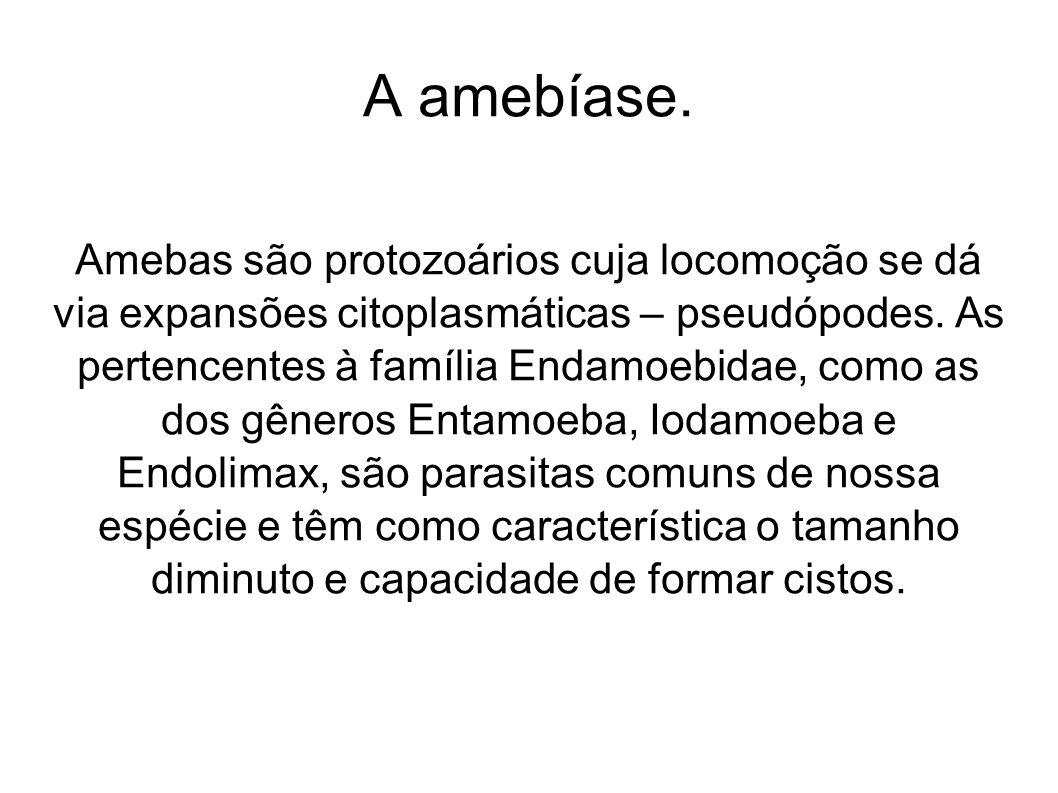 A amebíase. Amebas são protozoários cuja locomoção se dá via expansões citoplasmáticas – pseudópodes. As pertencentes à família Endamoebidae, como as