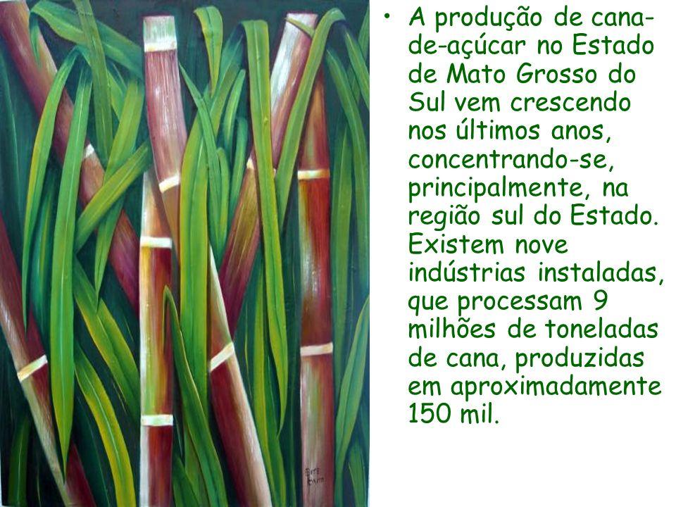 A produção de cana- de-açúcar no Estado de Mato Grosso do Sul vem crescendo nos últimos anos, concentrando-se, principalmente, na região sul do Estado.