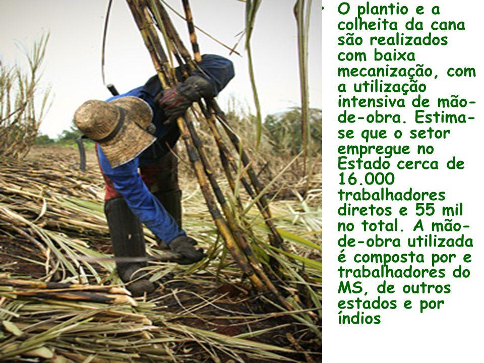 O plantio e a colheita da cana são realizados com baixa mecanização, com a utilização intensiva de mão- de-obra.