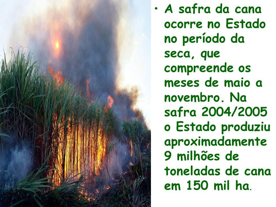 A safra da cana ocorre no Estado no período da seca, que compreende os meses de maio a novembro. Na safra 2004/2005 o Estado produziu aproximadamente