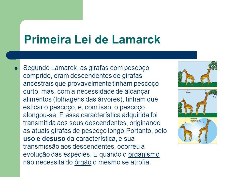 Primeira Lei de Lamarck Segundo Lamarck, as girafas com pescoço comprido, eram descendentes de girafas ancestrais que provavelmente tinham pescoço cur