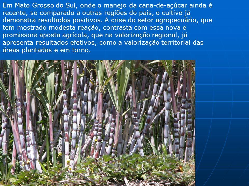 Em Mato Grosso do Sul, onde o manejo da cana-de-açúcar ainda é recente, se comparado a outras regiões do país, o cultivo já demonstra resultados posit