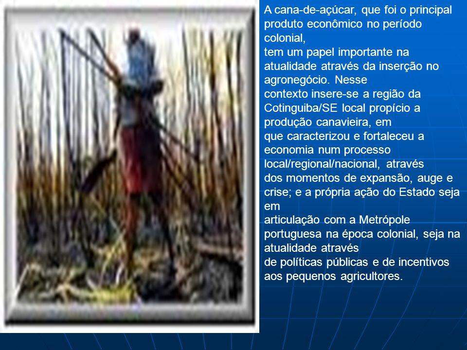 A cana-de-açúcar, que foi o principal produto econômico no período colonial, tem um papel importante na atualidade através da inserção no agronegócio.