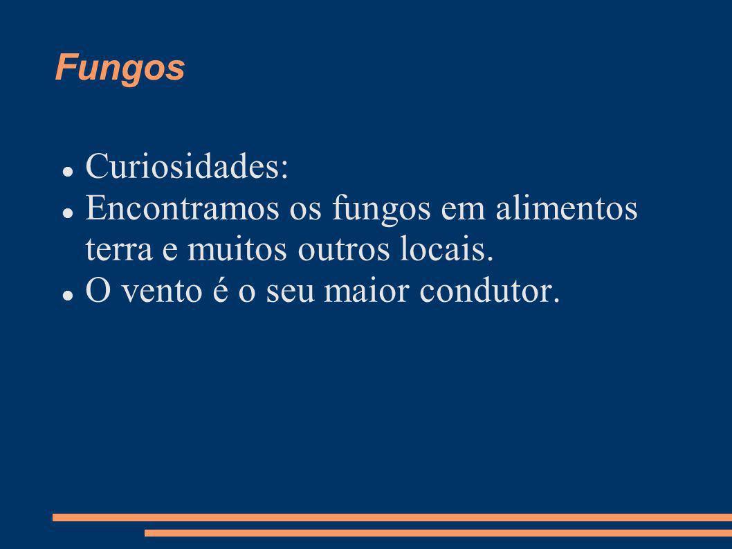 Fungos Curiosidades: Encontramos os fungos em alimentos terra e muitos outros locais. O vento é o seu maior condutor.