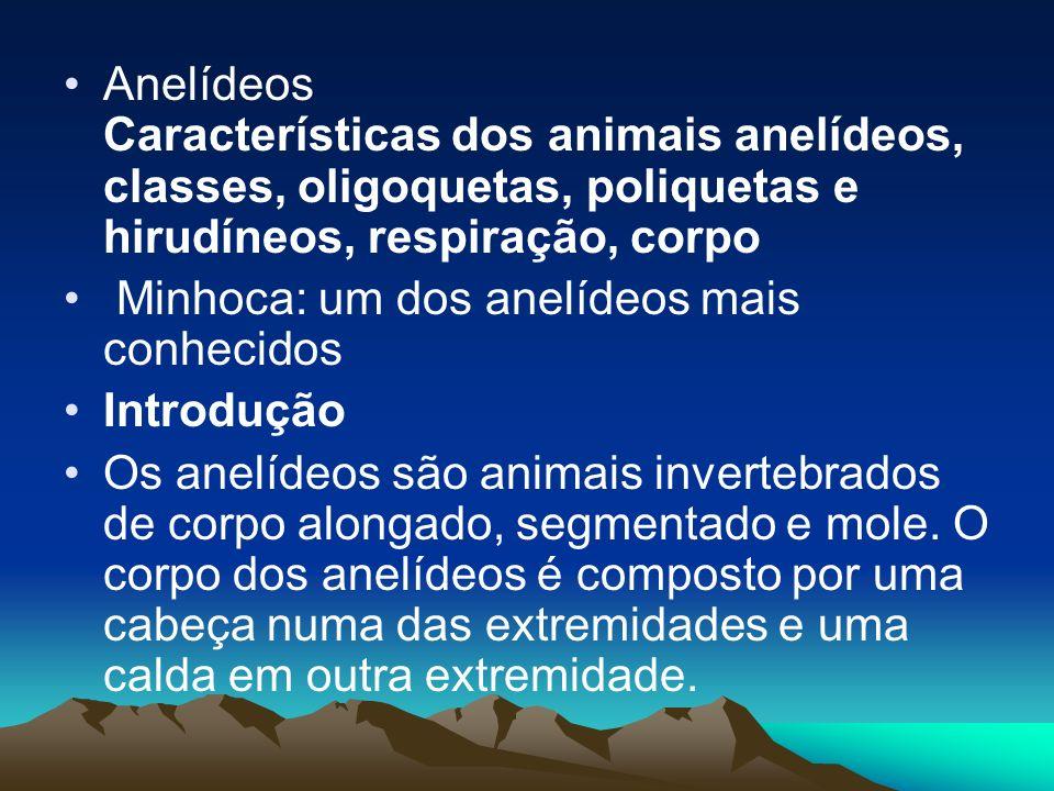Anelídeos Características dos animais anelídeos, classes, oligoquetas, poliquetas e hirudíneos, respiração, corpo Minhoca: um dos anelídeos mais conhe