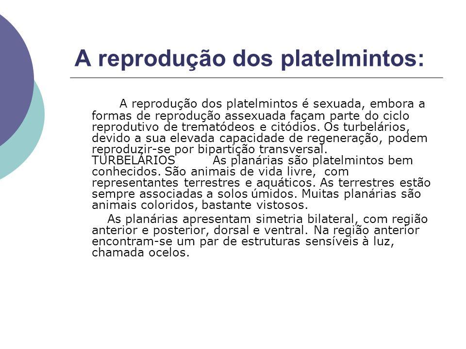 A reprodução dos platelmintos: A reprodução dos platelmintos é sexuada, embora a formas de reprodução assexuada façam parte do ciclo reprodutivo de tr