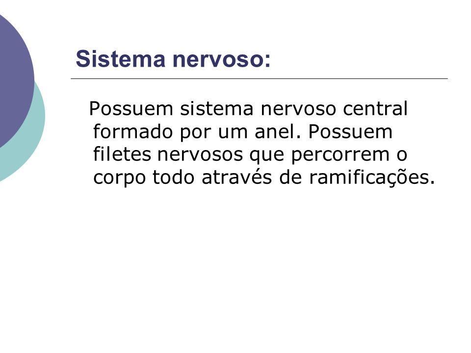 Sistema nervoso: Possuem sistema nervoso central formado por um anel. Possuem filetes nervosos que percorrem o corpo todo através de ramificações.