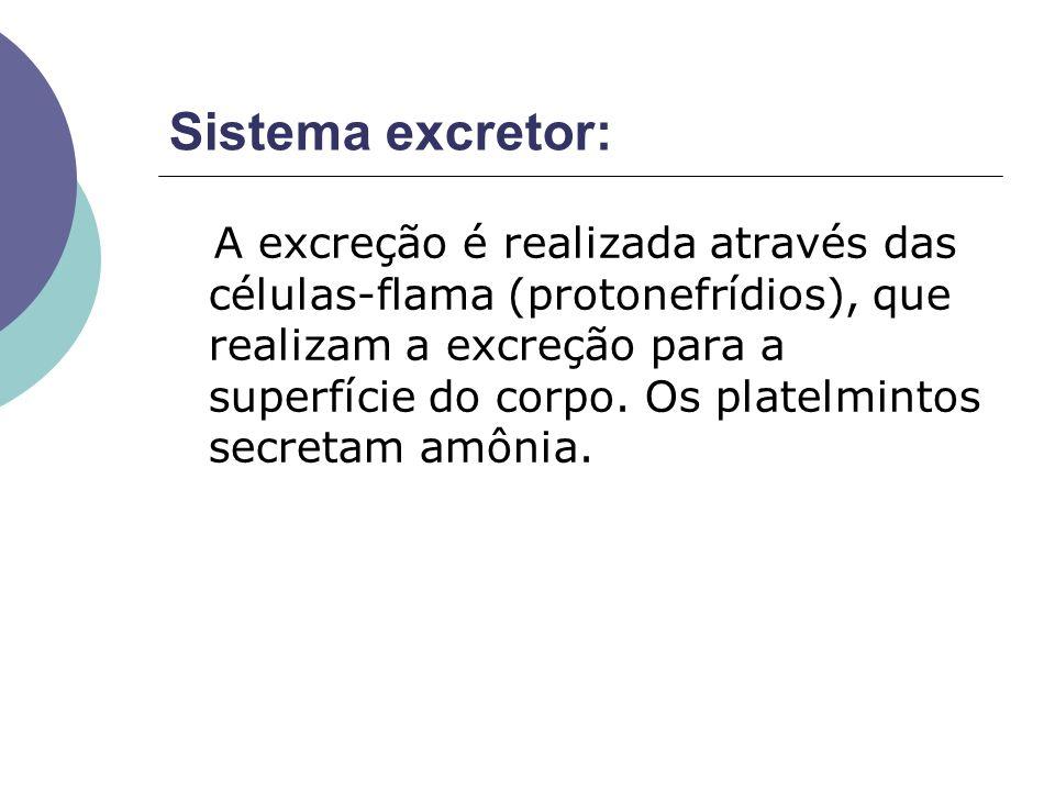 Sistema excretor: A excreção é realizada através das células-flama (protonefrídios), que realizam a excreção para a superfície do corpo. Os platelmint