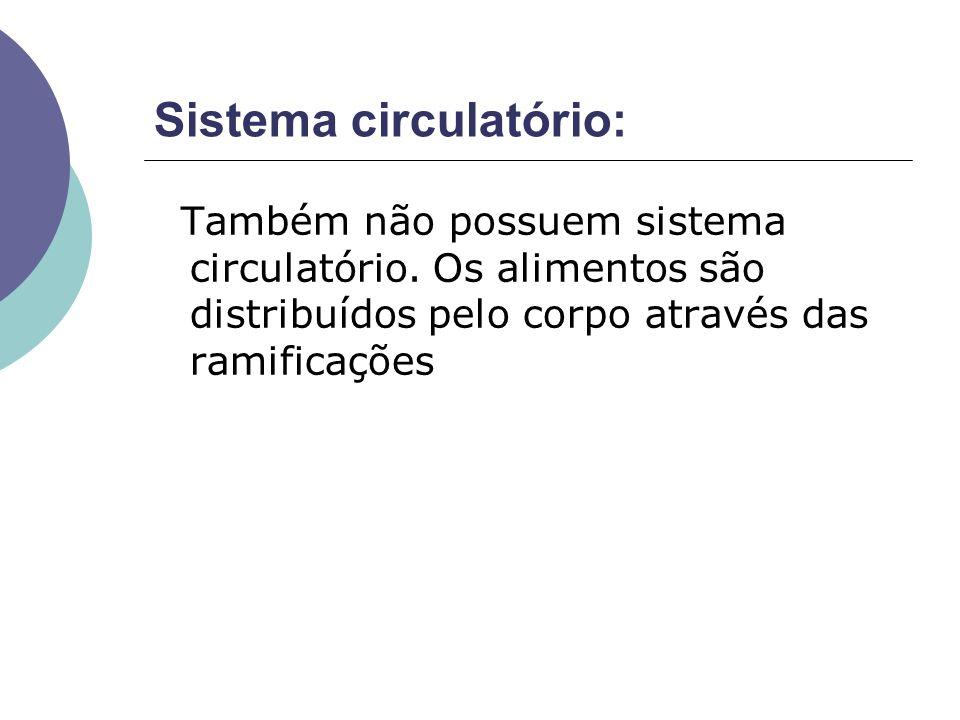 Sistema circulatório: Também não possuem sistema circulatório. Os alimentos são distribuídos pelo corpo através das ramificações