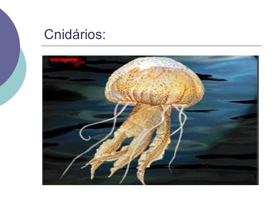 Cnidários: