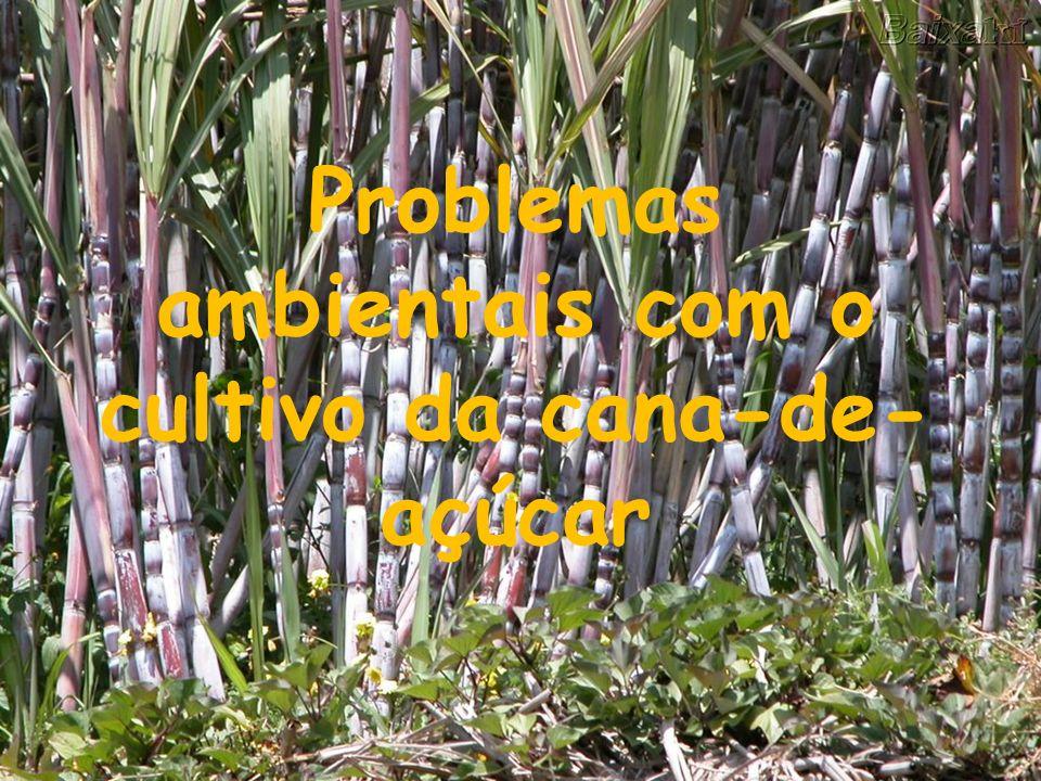 Problemas ambientais com o cultivo da cana-de- açúcar