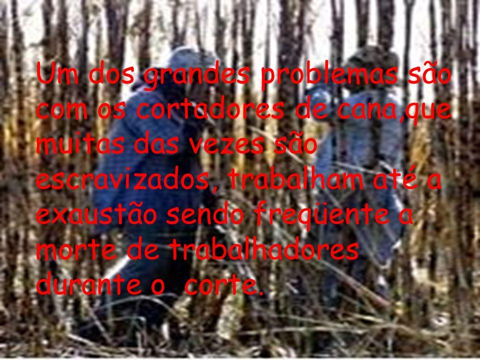 Um dos grandes problemas são com os cortadores de cana,que muitas das vezes são escravizados, trabalham até a exaustão sendo freqüente a morte de trab
