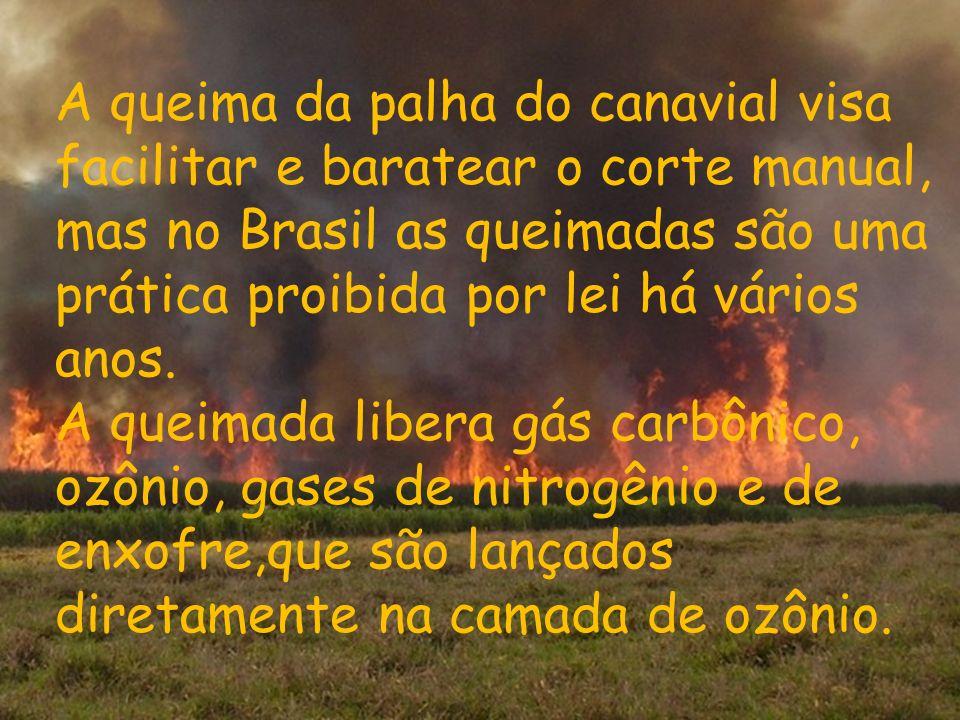 A queima da palha do canavial visa facilitar e baratear o corte manual, mas no Brasil as queimadas são uma prática proibida por lei há vários anos. A