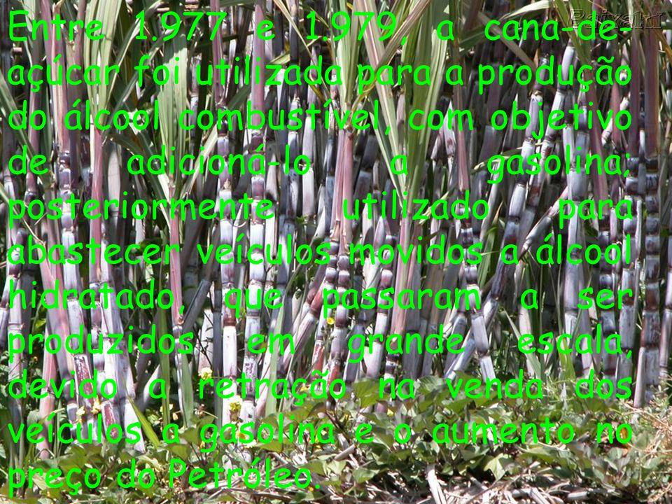Entre 1.977 e 1.979, a cana-de- açúcar foi utilizada para a produção do álcool combustível, com objetivo de adicioná-lo a gasolina; posteriormente uti