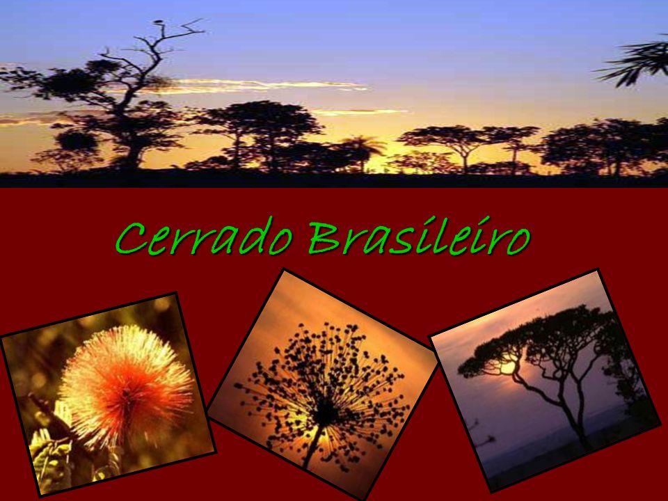 Dados Gerais Área: 2.036.448 Km² ou seja 23,92% do território brasileiro.