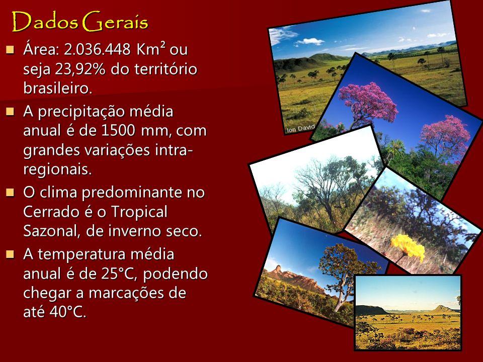 Dados Gerais Área: 2.036.448 Km² ou seja 23,92% do território brasileiro. Área: 2.036.448 Km² ou seja 23,92% do território brasileiro. A precipitação