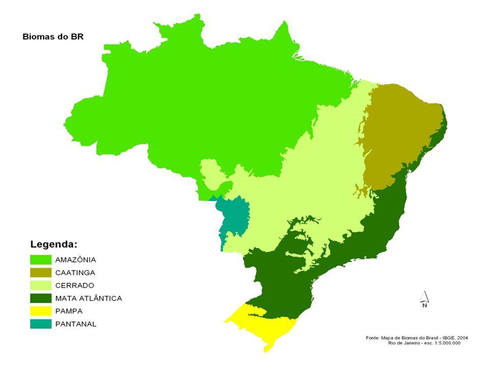 Principal importância do cerrado Muitas populações sobrevivem dele, incluindo etnias indígenas e comunidades quilombolas, que fazem parte do patrimônio histórico e cultural brasileiro Muitas populações sobrevivem dele, incluindo etnias indígenas e comunidades quilombolas, que fazem parte do patrimônio histórico e cultural brasileiro
