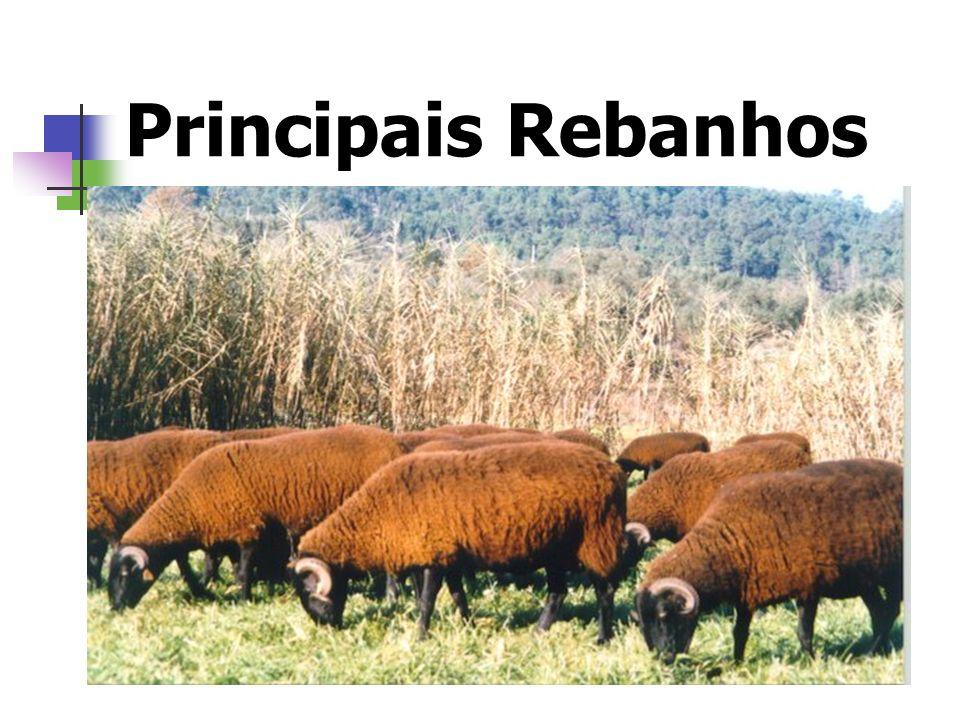Principais Rebanhos