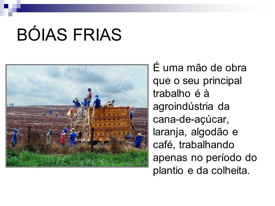 TRABALHO ASSALÁRIADO Representa apenas 10% da mão- de-obra agrícola.