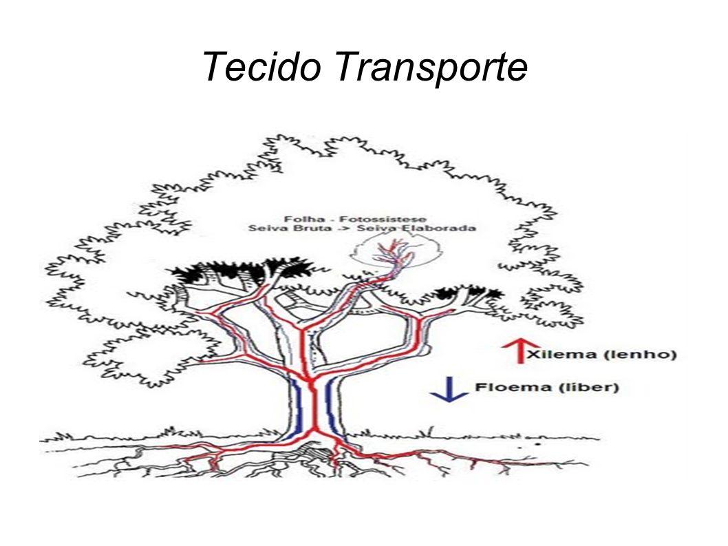 Tecido Transporte