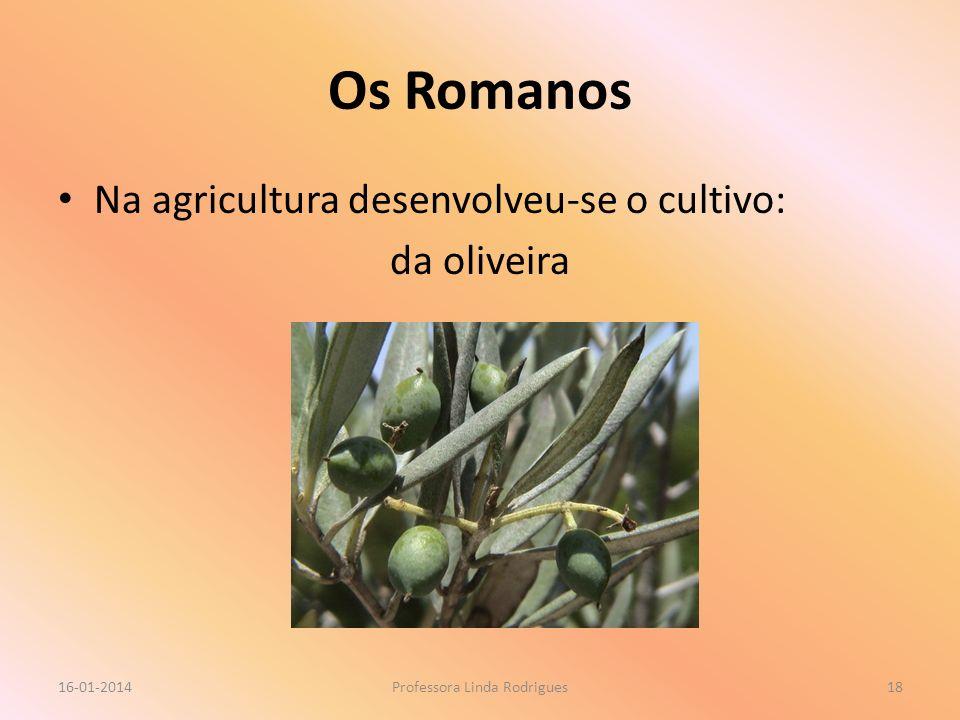 Os Romanos Na agricultura desenvolveu-se o cultivo: da oliveira 16-01-2014Professora Linda Rodrigues18
