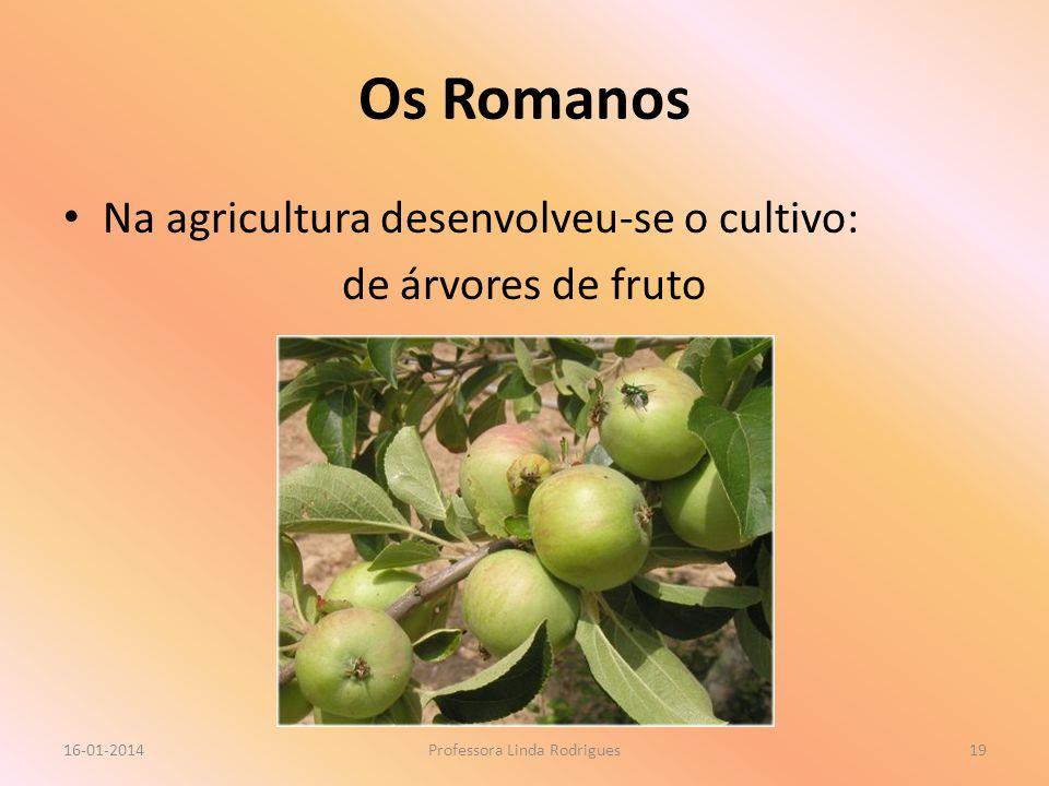 Os Romanos Na agricultura desenvolveu-se o cultivo: de árvores de fruto 16-01-2014Professora Linda Rodrigues19