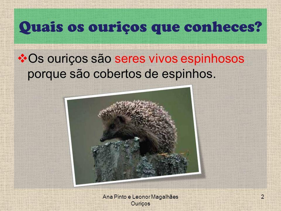 Ouriço-Cacheiro Referências Bibliográficas: https://docs.google.com/present/embed?hl= pt_PT&id=0AWFXleGrWdsrZGdxYmNtcW pfMjg3Y3A1MmMyYzY&size=m Ana Pinto e Leonor Magalhães Ouriços 13