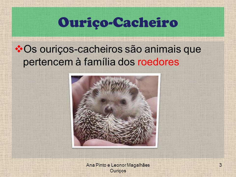 Ouriço-Cacheiro Os ouriços-cacheiros são animais que pertencem à família dos roedores 3Ana Pinto e Leonor Magalhães Ouriços
