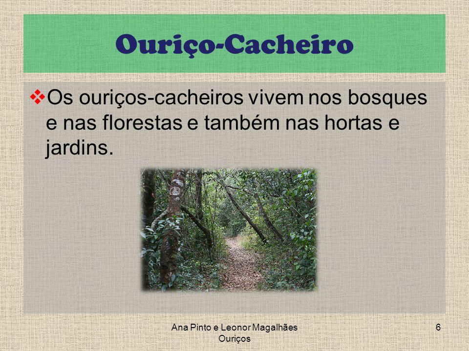Ouriço-Cacheiro Os ouriços-cacheiros vivem nos bosques e nas florestas e também nas hortas e jardins. Ana Pinto e Leonor Magalhães Ouriços 6
