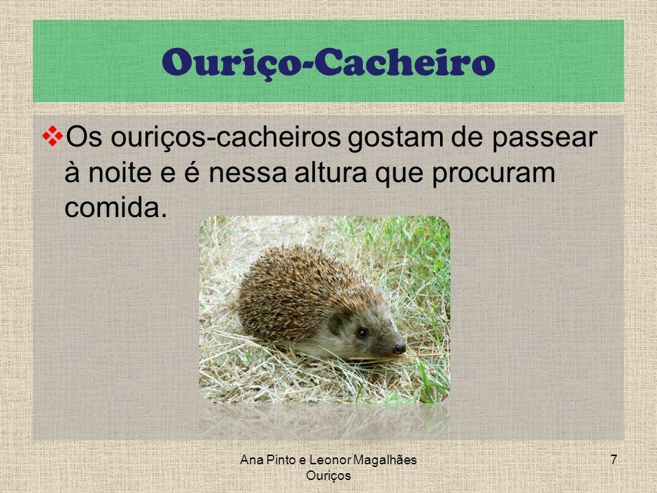 Ouriço-Cacheiro Os ouriços-cacheiros gostam de passear à noite e é nessa altura que procuram comida. Ana Pinto e Leonor Magalhães Ouriços 7