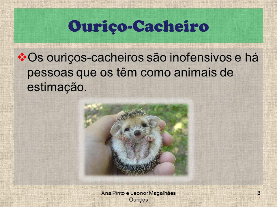 Ouriço-Cacheiro Os ouriços-cacheiros são inofensivos e há pessoas que os têm como animais de estimação. Ana Pinto e Leonor Magalhães Ouriços 8