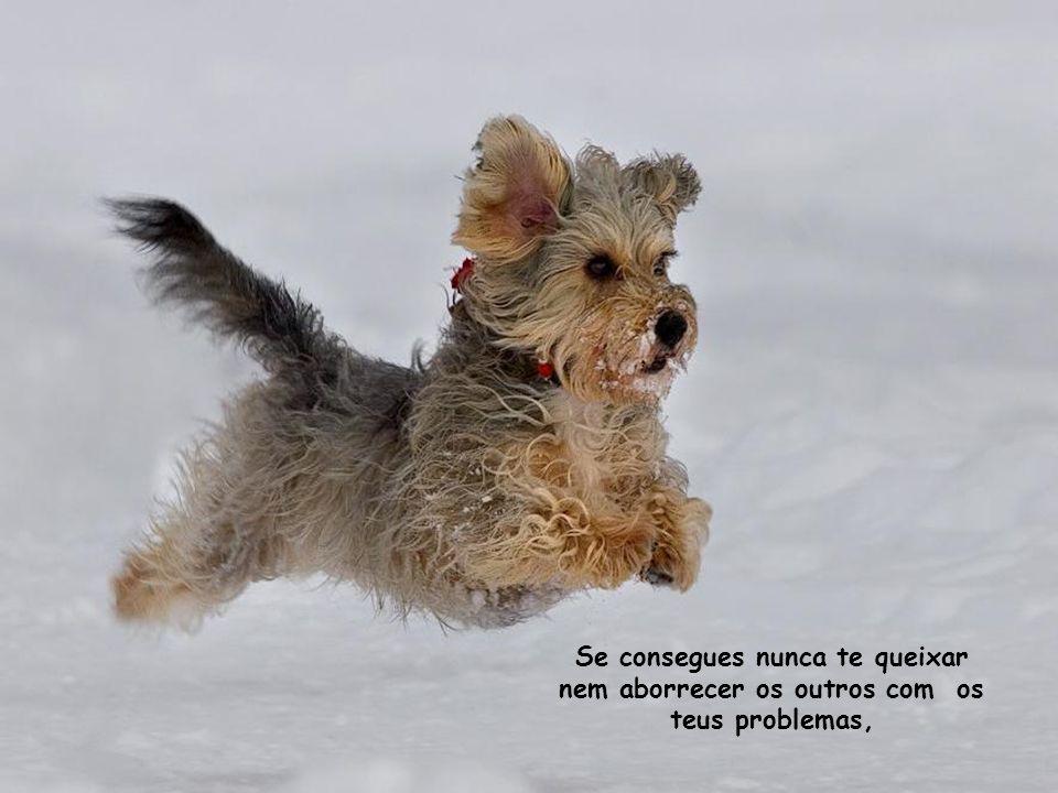 Se consegues estar de bom humor, sabendo ignorar os teus males e as tuas dores,