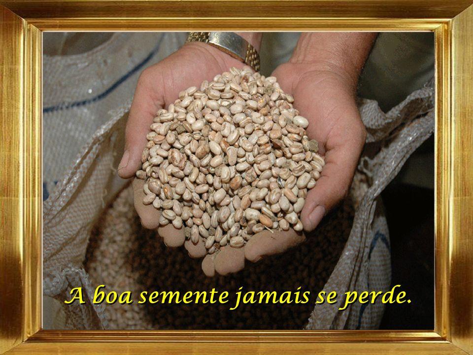 A boa semente jamais se perde. A boa semente jamais se perde.