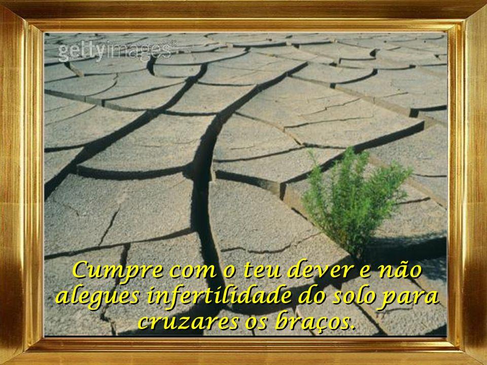 O teu trabalho é o de semear; o da gleba é o de produzir. O teu trabalho é o de semear; o da gleba é o de produzir.