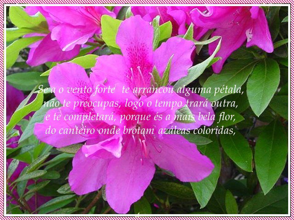 Se a o vento forte te arrancou alguma pétala, não te preocupas, logo o tempo trará outra, e te completará, porque és a mais bela flor, do canteiro onde brotam azáleas coloridas,
