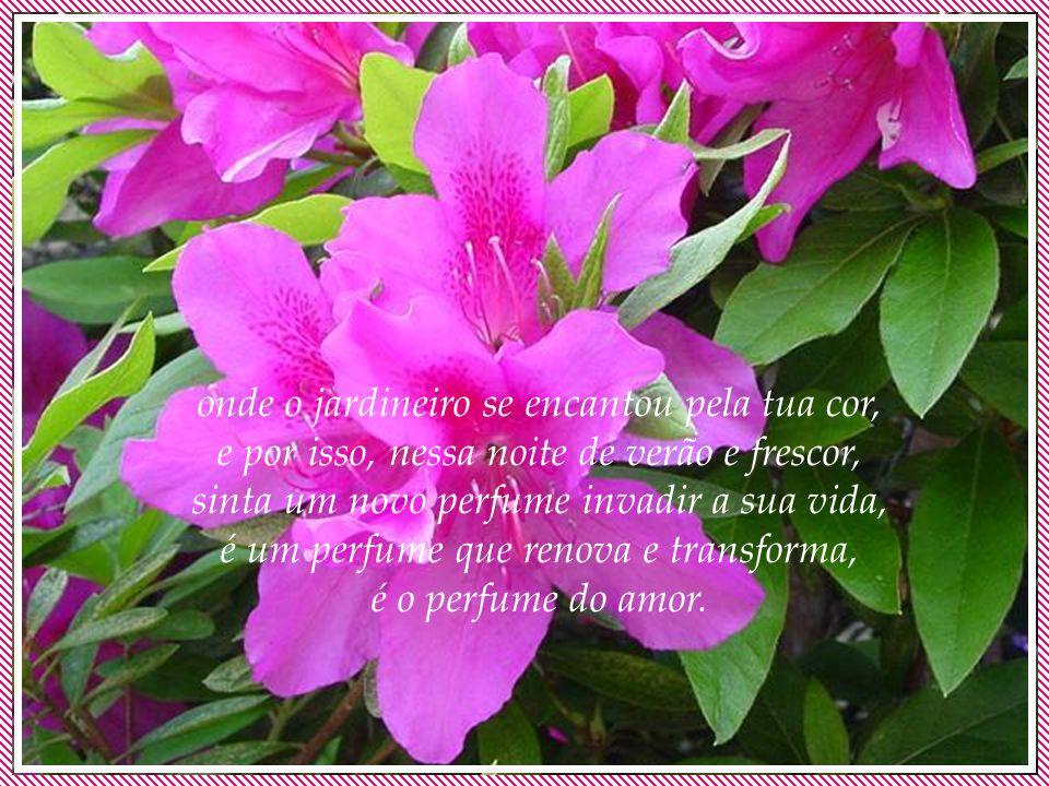 onde o jardineiro se encantou pela tua cor, e por isso, nessa noite de verão e frescor, sinta um novo perfume invadir a sua vida, é um perfume que renova e transforma, é o perfume do amor.