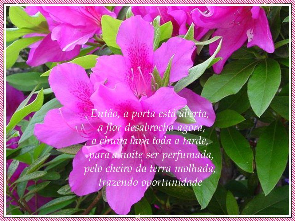 Então, a porta está aberta, a flor desabrocha agora, a chuva lava toda a tarde, para a noite ser perfumada, pelo cheiro da terra molhada, trazendo oportunidade